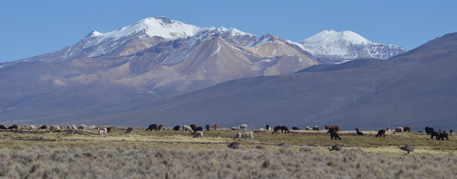Widok na Andy z trasy trekkingu lamy na pierwszym planie