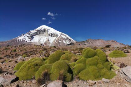 Widok na ośnieżony wulkan Sajama z trasy trekkingu